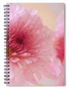 Chrysanthemums #011 Spiral Notebook