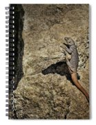 Chuckwalla - Crevice Spiral Notebook