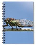 Cicada On The Line Spiral Notebook