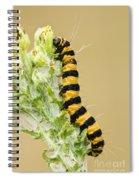 Cinnabar Moth Caterpillar Spiral Notebook
