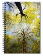 Circle Of Trees Spiral Notebook