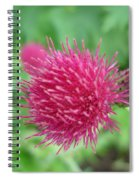 Cirsium Burgandy Thistle Spiral Notebook