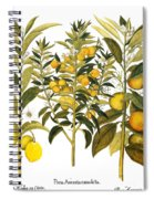 Citron And Orange, 1613 Spiral Notebook