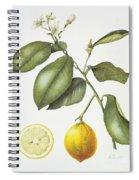Citrus Bergamot Spiral Notebook