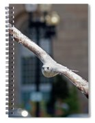 City Gull Spiral Notebook