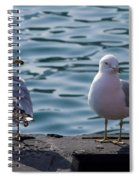 City Gulls Spiral Notebook