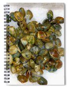 Clams In The Fish Market Spiral Notebook