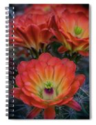 Claret Cup Cactus Flowers  Spiral Notebook
