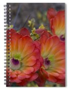 Claret Cup Cactus - Three Of A Kind  Spiral Notebook
