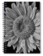 Classic Black And White Sunflower Spiral Notebook