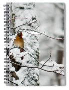 Classic Cardinal In Snow Spiral Notebook