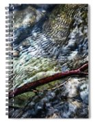 Clear Water Level With Twigs Spiral Notebook