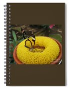 Clearwing Butterfly Spiral Notebook