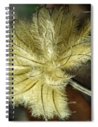 Clematis Seed Head 1 Spiral Notebook