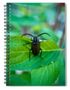 Climbing Beetle Spiral Notebook