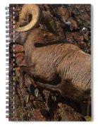 Climbing Spiral Notebook