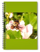 Close Up Bumble Bee Climbing Out Of Hibiscus Flower Spiral Notebook