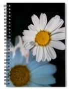 Close Up Daisy Spiral Notebook