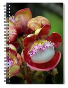 Close-up Macro Of Flower And Fruit Of Cannonball Tree Spiral Notebook