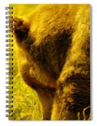 Close Up Of A Grizzily Spiral Notebook