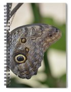 Close Up Of A Pretty Brown Morpho Butterfly  Spiral Notebook