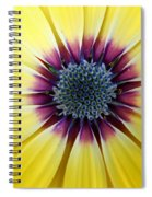 Close-up Of A Yellow African Daisy Spiral Notebook