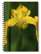 Close Up Of A Yellow Bearded Iris Spiral Notebook