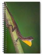 Close-up Of An Anole, Tortuguero, Costa Spiral Notebook