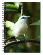 Close-up Of Bali Myna Bird In Trees Spiral Notebook