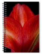 Close-up Of Colorful Amaryllis Flower Petals Spiral Notebook