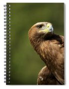 Close-up Of Golden Eagle With Head Turned Spiral Notebook