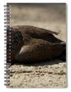 Close-up Of Mottled Pigeon On Sandy Ground Spiral Notebook