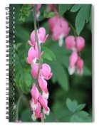 Close Up Of Peacock Pink Bleeding Hearts On Hunter Green Foliage 2 Spiral Notebook