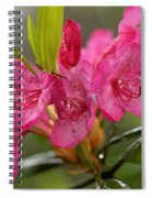 Close-up Of Pink Horatio Flowers Spiral Notebook