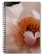 Close-up Of Pink Ladies Flowers Spiral Notebook