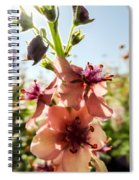 Close-up Of Pink Mullein Flowers Spiral Notebook