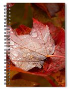 Close-up Of Raindrops On Maple Leaves Spiral Notebook