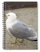 Close-up Of Seagull Spiral Notebook