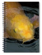 Close Up Of Single Large Yellow Koi Fish With Whiskers Spiral Notebook