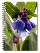 Close-up Of Virginia Bluebells Spiral Notebook