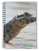 Close-up Of Yacare Caiman On Sandy Beach Spiral Notebook