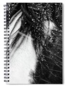Close Up Portrait Of A Horse In Falling Snow Spiral Notebook