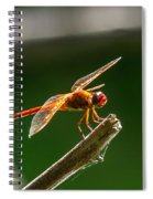 Close Up Red Dragonfly Spiral Notebook