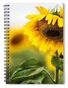 Close Up Single Sunflower In South Dakota Spiral Notebook