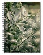 Close Up Wild Flower Spiral Notebook