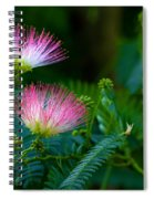 Closeup Of A Mimosa Bloom Spiral Notebook