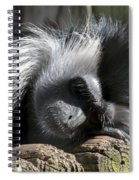 Closeup Of Black And White Angolian Primate Sleeping On Log Raft Spiral Notebook