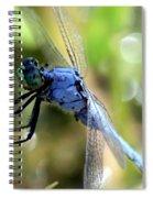 Closeup Of Blue Dragonfly Spiral Notebook