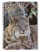 Closeup Of Bobcat Spiral Notebook