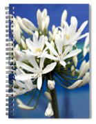 Closeup White Californian Flower Spiral Notebook